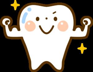 歯を丈夫にする